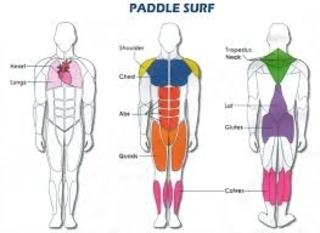 Músculos ejercitados mediante el SUP